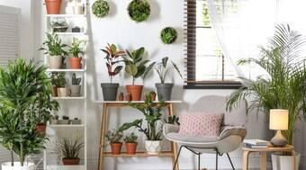 Inspire-se em dicas para decorar sua casa com flores e plantas