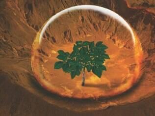 Para pesquisadores, batatas poderiam alimentar uma futura colônia humana em Marte