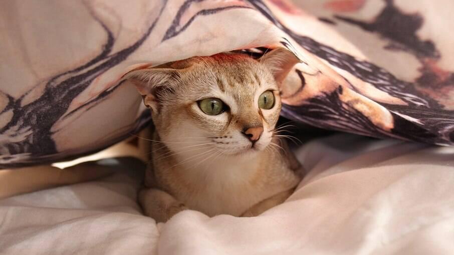 Gato podem tremer por medo e estresse