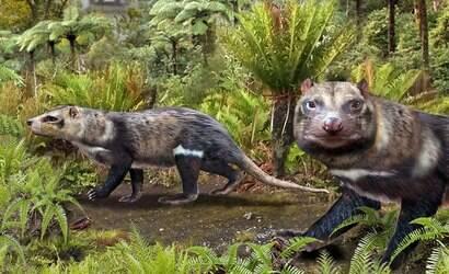 Fóssil de 'gambá' que viveu com dinossauros é encontrado