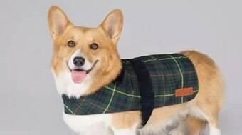 Rainha Elizabeth lança coleção de roupas e brinquedos para cães