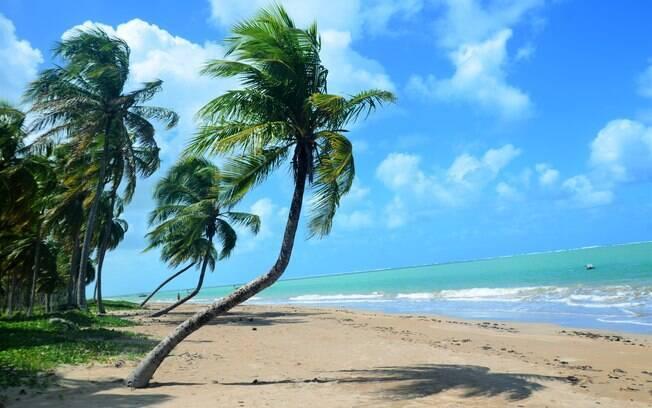 Foto com palmeiras, a areia da praia e o mar azul de são miguel dos milagres