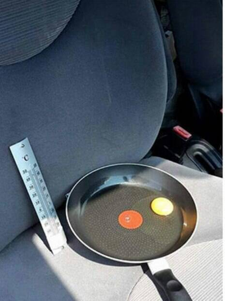 Ovo no carro em dia quente mostra que seu cão não deve ficar lá