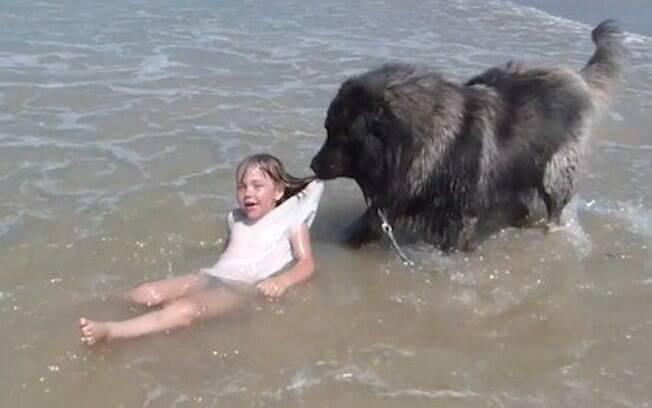 O cão fiel segurou a criança pela camiseta e a arrastou até uma área segura