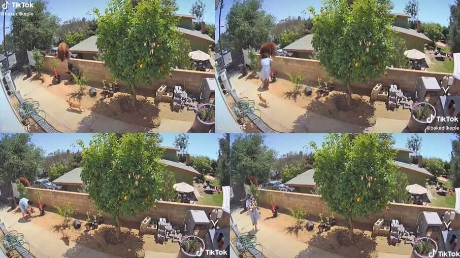 Mulher empurra urso de cima do muro para proteger seus cães