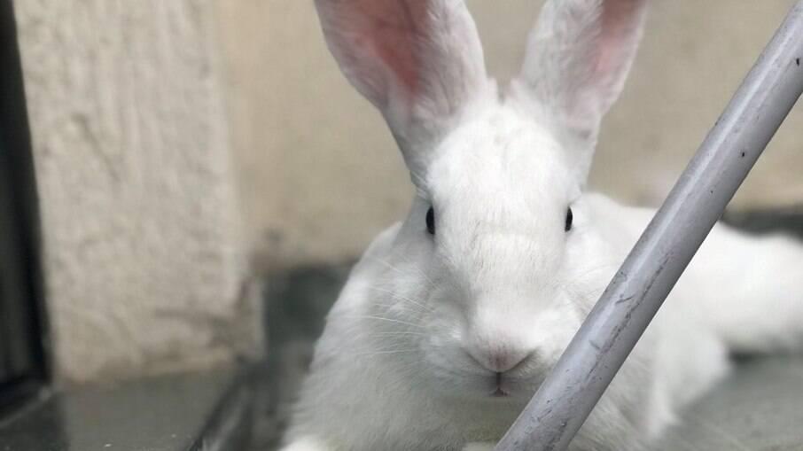 Os coelhos se expressam de um jeito único