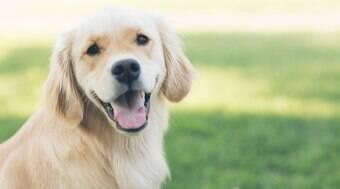 Quer ter um pet? Aprenda a escolher a raça certa de cachorro