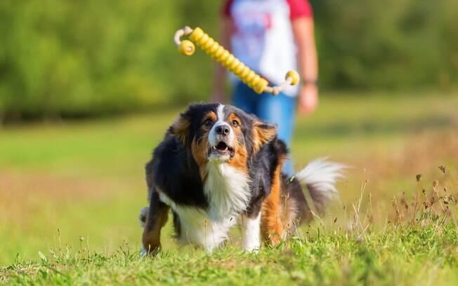 Os brinquedos para cachorro podem ajudar também no adestramento e melhora do comportamento do pet