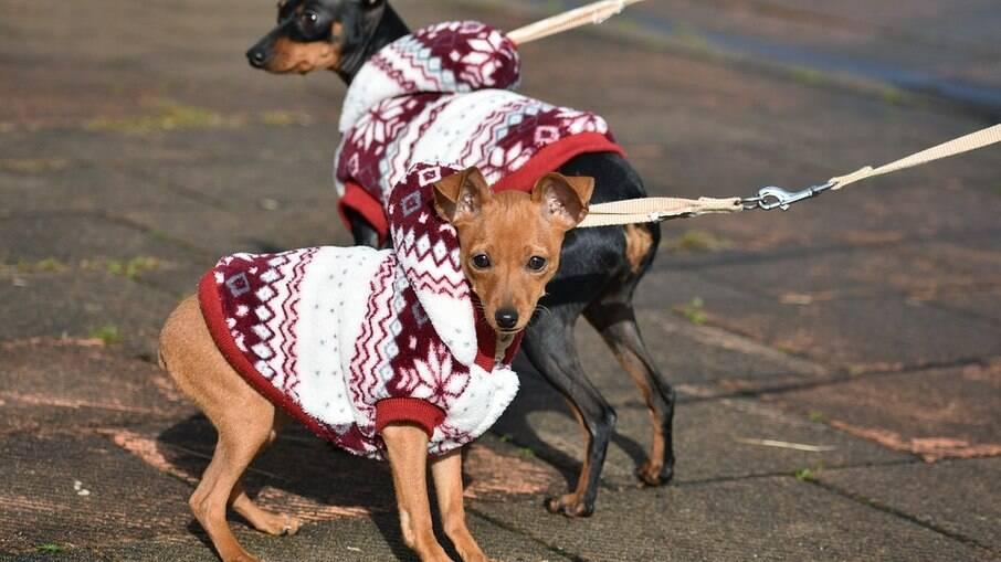 O pet precisa estar aquecido e confortável, ser fashion é consequência