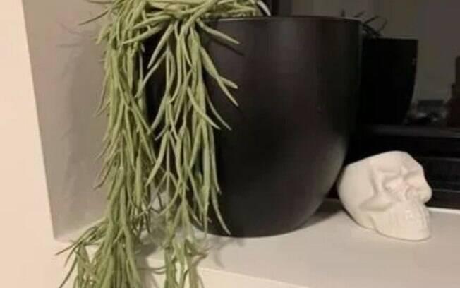 A mulher divulgou a história da planta artificial em um grupo do Facebook e disse que o namorado a regou por meses