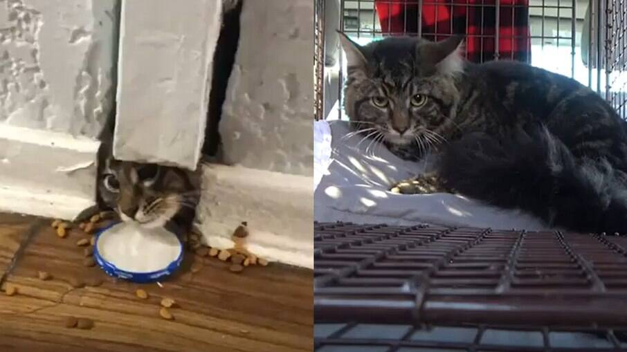 Gato é resgatado de dentro de uma parede