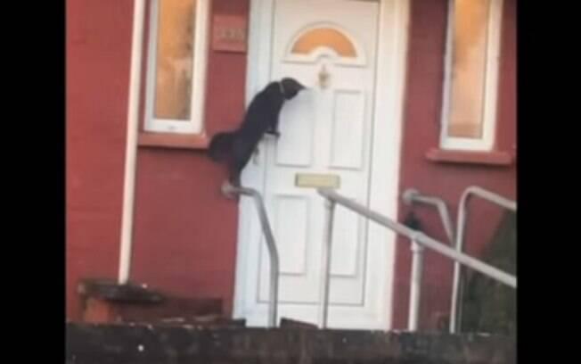 Gatinho batendo na porta em vídeo viral