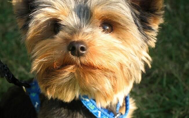Nomes engraçados para cachorro também podem ser uma opção para chamar o seu cãozinho