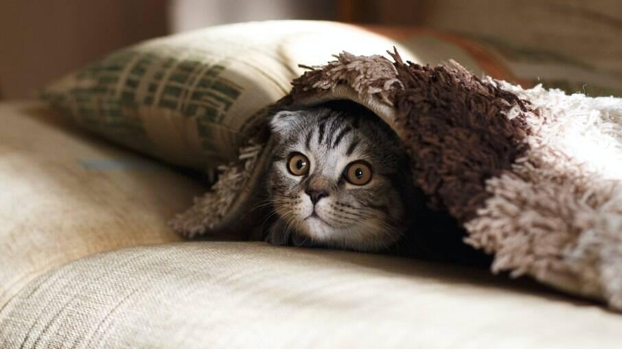 Gatos podem chegar assustados ao novo ambiente, dê um tempo e lugar reservado para que o pet se acostume