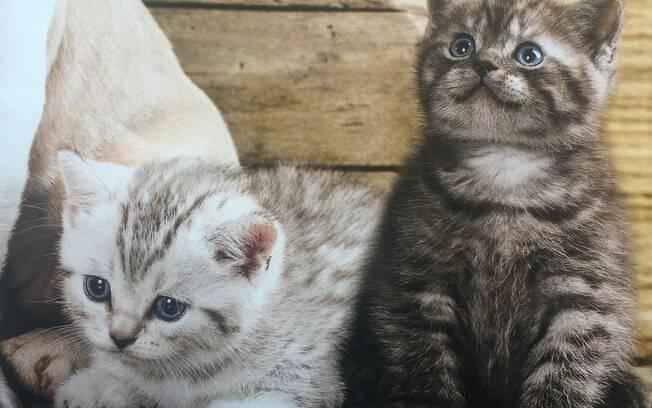 É importante evitar que o bichinho tenha muito contato com 'perigos para a saúde' antes de receber as vacinas para gatos