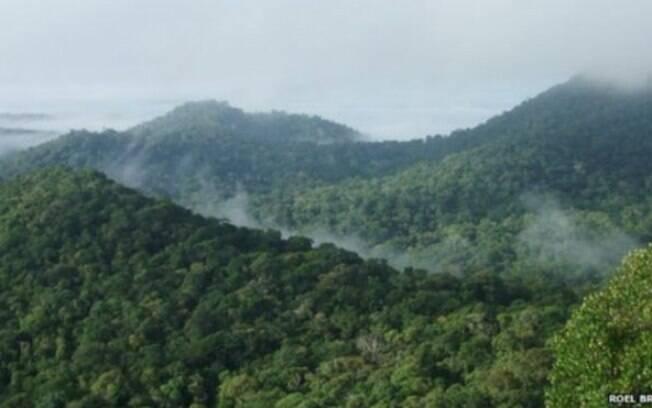 Amazônia abriga 17% do carbono estocado pela vegetação do planeta