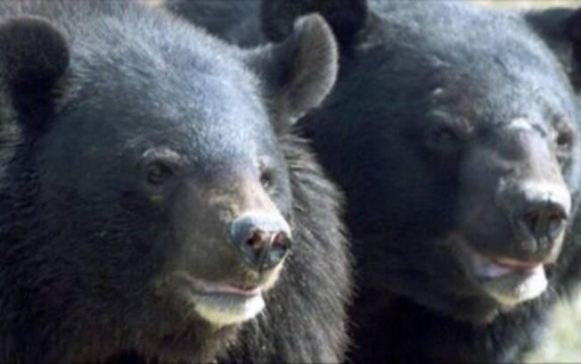 Homem adotou casal de ursos pensando que eram filhotes de cachorros.