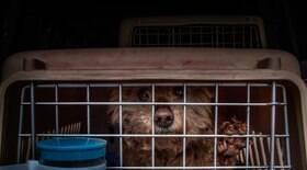 68 cães são resgatados a caminho de