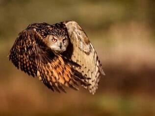Veja as melhores fotos de natureza