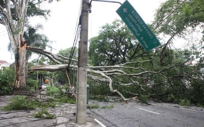 No último dia 30 de dezembro, a capital paulista teve fortes temporais que ocasionaram quedas de árvores