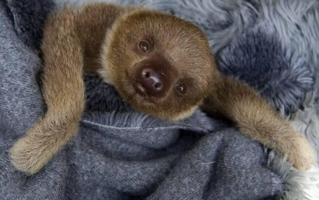 Uma preguiça fofinha.