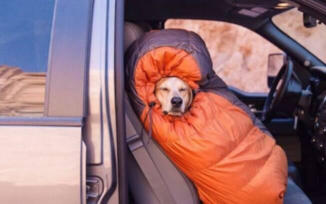 São preciso alguns preparativos para viajar com animal