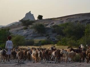 Rabari.  Nômade conduz seu rebanho pela região de Jawai