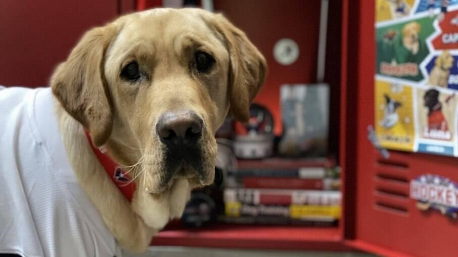 Capitão, o cachorro que ajudará um ex militar a levar uma vida mais independente