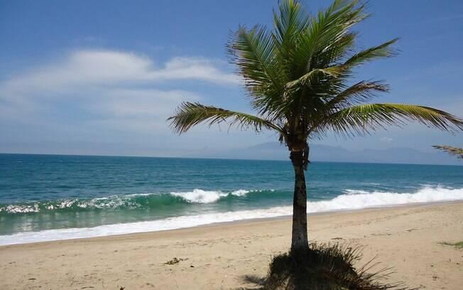 Coqueiro na Praia de Massaguaçu, em Caraguatatuba