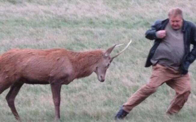 Após desrespeitar as regras do parque, o homem quase foi chifrado pelo cervo