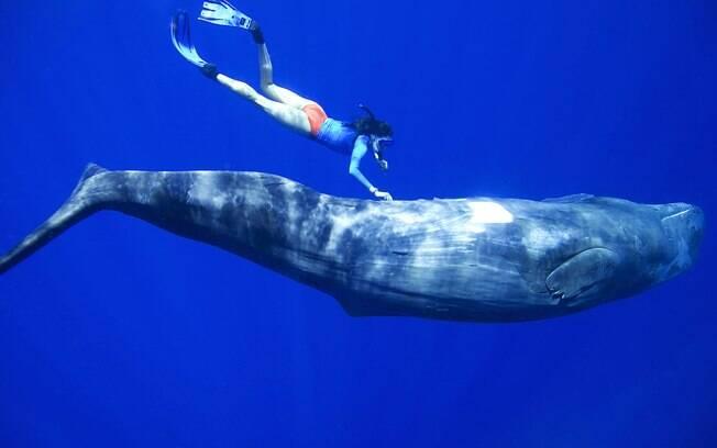 De janeiro a março, é possível nadar com baleias nos mares da República Dominicana