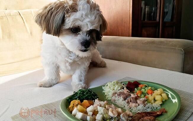 A qualidade de vida da Boo melhorou muito após a alimentação natural