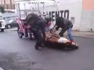 Cavalo desmaiou em rua de Poços de Caldas