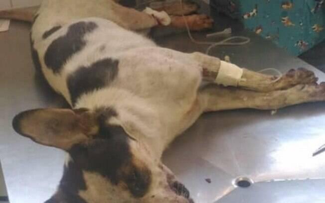 Funcionário do Carrefour teria espancado e envenenado cachorro, que não resistiu aos ferimentos e faleceu. Foto: Reprodução Facebook