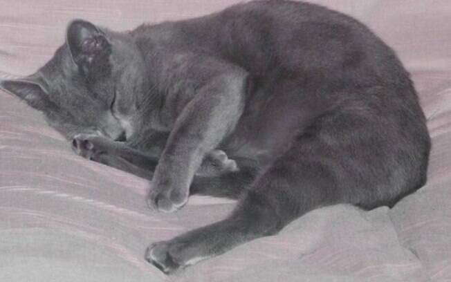 Saiba o motivo para o seu gato ter tanto sono e só pensar em dormir