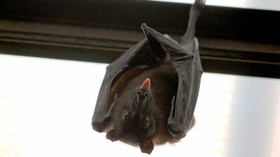 Idoso morre de raiva após ser mordido por morcego enquanto dormia