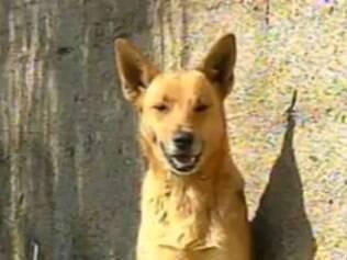 Cachorra Kiara salvou menina de 10 anos, mordendo o agressor na perna