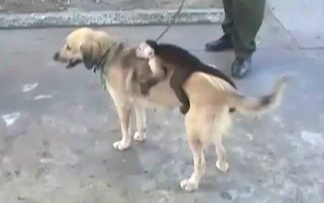 Cadela adota bebê macaco após perder tragicamente seus filhotes