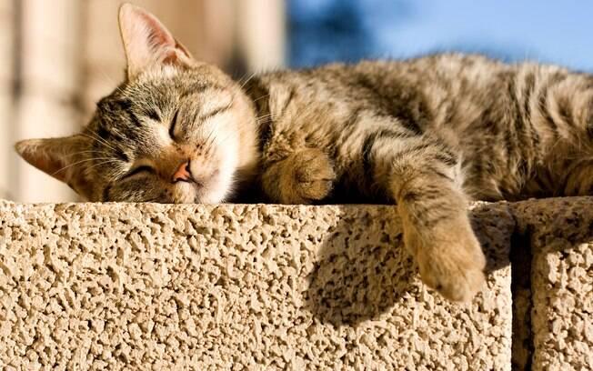 Evite que seu animal fique muitas horas exposto ao sol nas estações mais quentes