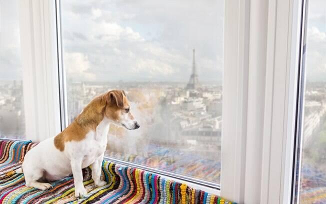 Passear pelas belas ruas e pontes parisienses será incrível ao lado do pet