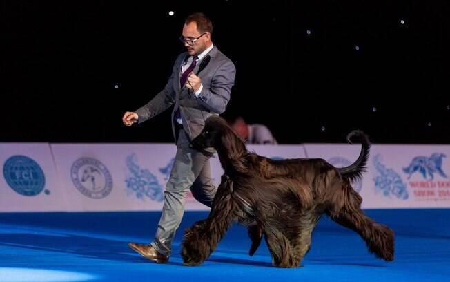É preciso obter um certificado de aptidão ao campeonato de beleza canino. Esse comprovante reconhece que seu cachorro é um bom candidato para participar