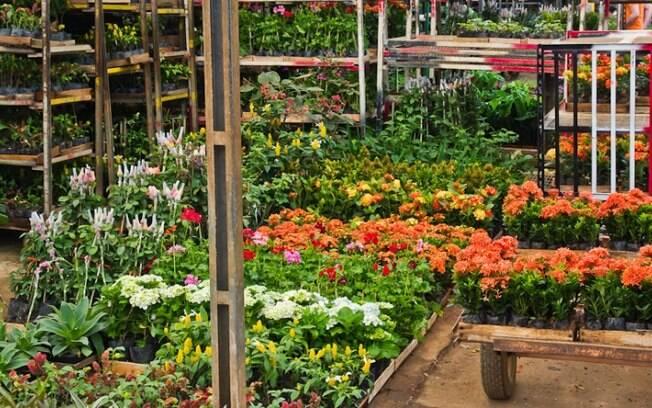 Finados: receosos, produtores de flores diminuem oferta em 20%