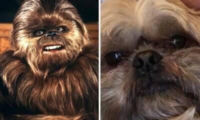 Donos exibem pets que são a cara de personagens do cinema