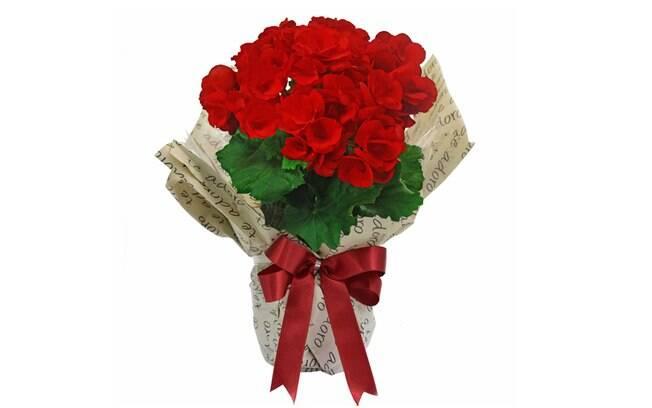 Begônia Vermelha Para Dizer Que Te Adoro; Por: R$ 97,49 em até 3x de R$ 32,50