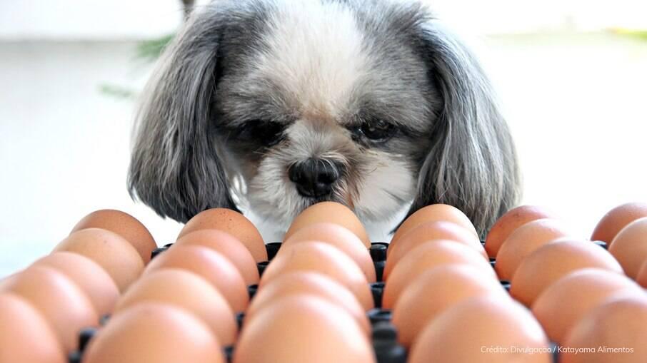Animais de estimação podem comer ovos?