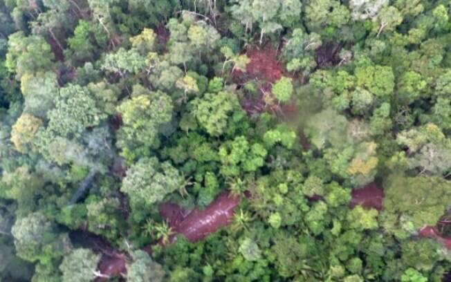 Equipe do ISA sobrevoou 7600 km da Cacheoira Seca e registrou o impacto da ação dos madeireiros