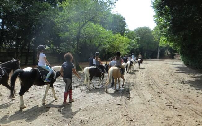 Mais de 30 animais, entre cavalos de raça, cavalo de volteio e pôneis, estarão disponíveis