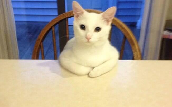 Fotos de gatos estranhos são realmente hilárias