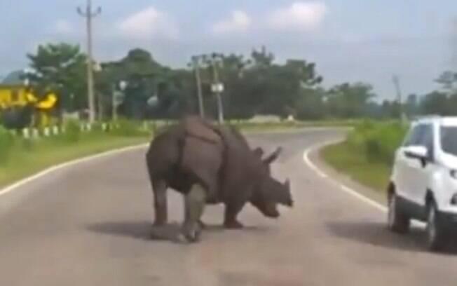 Rinoceronte em estrada