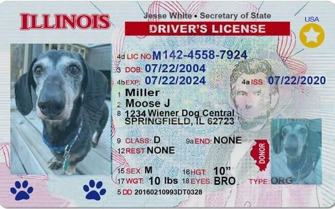 Carteira de Motorista de Moose